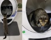 Katze misstraut der selbstreinigenden Katzentoilette noch etwas automatisches Katzenklo online kaufen