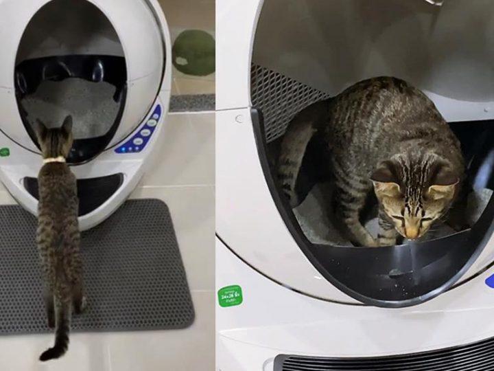 Selbstreinigenden Katzentoilette . Hightech Katzenklo für eure vierbeinigen Stubentiger