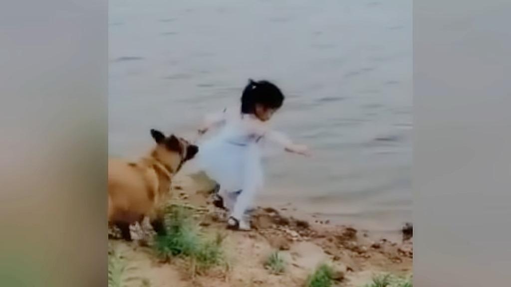 Hund rettet ein kleines Mädchen vermutlich vor dem Ertrinken